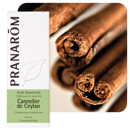 Cannelle de Ceylan - Cinnamomum Zeylanicum