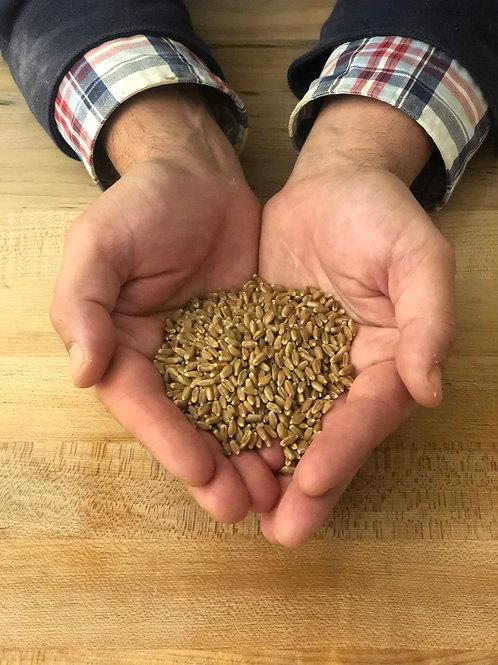2 lbs House Milled Stone Ground Yecora Rojo Flour