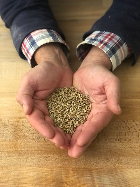 Bread and Flours - Organic Rye