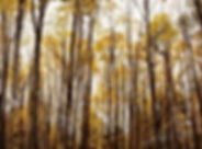 #autumn #centralnewyork #upstatenewyork