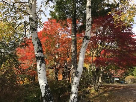 横谷観音の紅葉が始まりました。