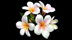 Flowers_BlackBack.jpg