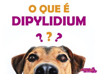 Saiba como diagnosticar, tratar e principalmente, evitar a dipilidiose, doença que acomete cães e ga