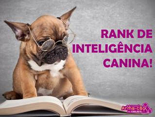 Ranking de inteligência canina