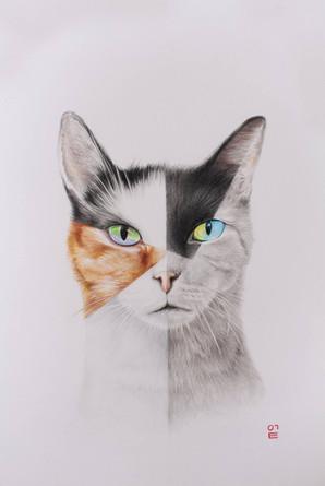 피카소 고양이