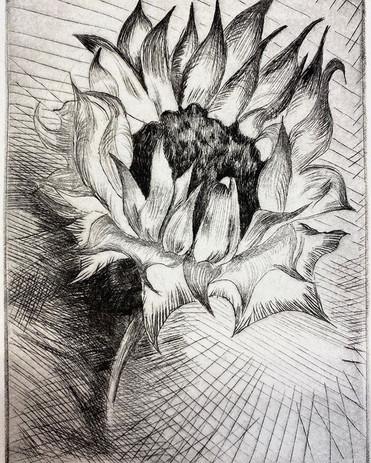 Sunflower, 2019