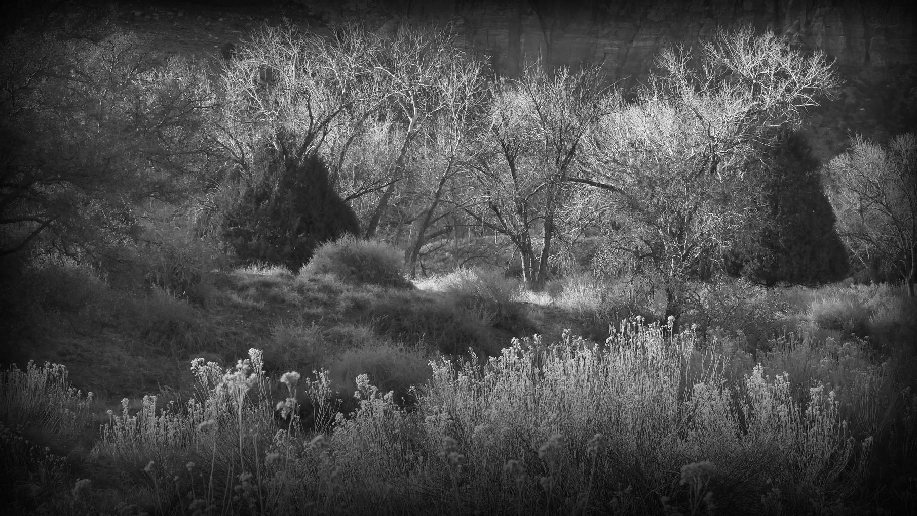 64-zion-park-natural-elements-.jpg