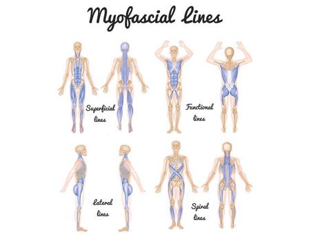 Myofascial Core Slings