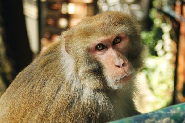 monkeyresized.jpg