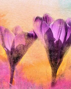 flower-2647505.jpg