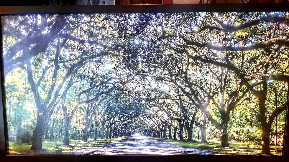 Historic Wormsloe. 44 x 22 meditative photography framed in black.
