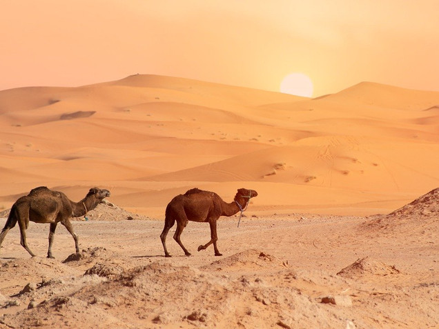 desert-4990324_1280.jpg