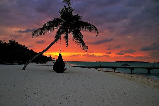 Maldives Palm tree hammock.jpg