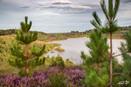 Mechelse Heide-83.jpg