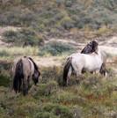 Parc national de Kennemerland du Sud