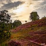 Mechelse Heide-106 3.jpg