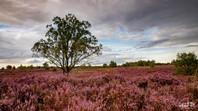 Mechelse Heide-113.jpg