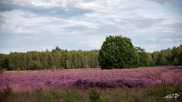Mechelse Heide-49.jpg
