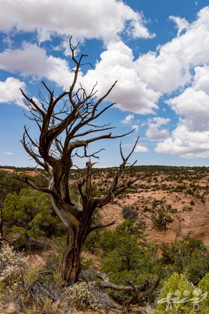 Navajo national monument, Arizona, Etats-unis