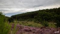 Mechelse Heide-129.jpg