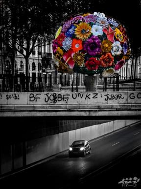 Arbre fler, Lyon, Wallophoto
