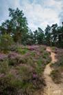 Mechelse Heide-20.jpg