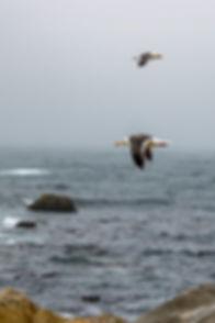 Mouettes, paysage de mer, wallophoto,yannick dubois, photo de paysage