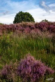 Mechelse Heide-42.jpg