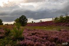 Mechelse Heide-111.jpg