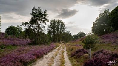 Mechelse Heide-100.jpg