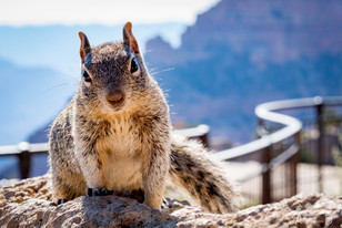 Mather point, Grand canyon, Arizona, Etats-Unis