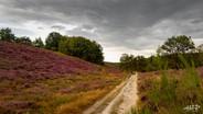 Mechelse Heide-107 1.jpg
