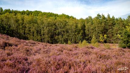 Mechelse Heide-37.jpg