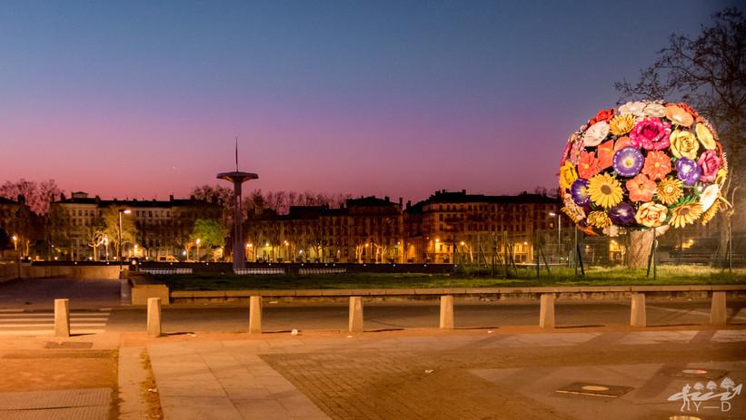 Arbre fleur, Lyon, Wallophoto