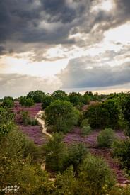 Mechelse Heide-96.jpg