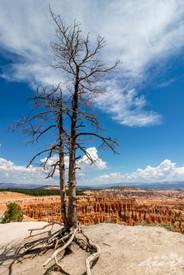 Bryce canyon, photographie de paysage, Utah, USA