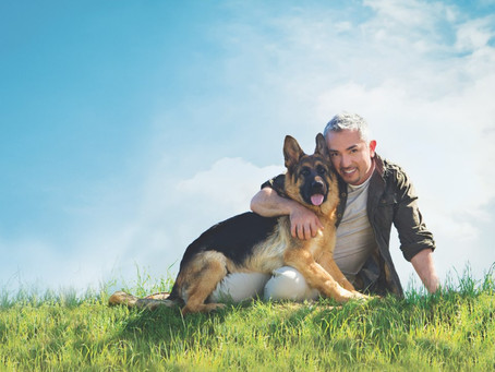 A Whisper To A Scream: Contradictions and Curiosities in the War Against Cesar Millan