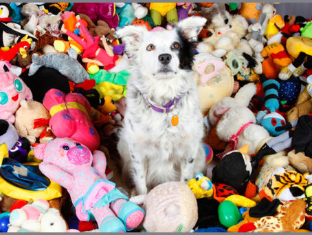 DOGS & COLOR CATEGORIZATION