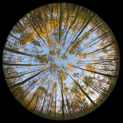 circle_of_trees_by_cassini246-d7c82oh
