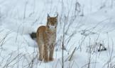 The Lynx Trust
