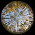 circle_of_trees_by_cassini246-d7c82oh.jp