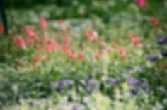 El campo de flores