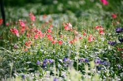 Blühen Sie Feld