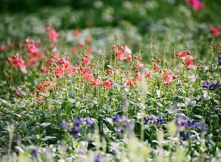 Manifest Your Garden