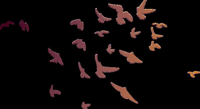 BOB_Flying Birds Illustration-01.png