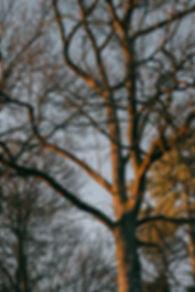 memoire_docu_nature_paysage-10.jpg