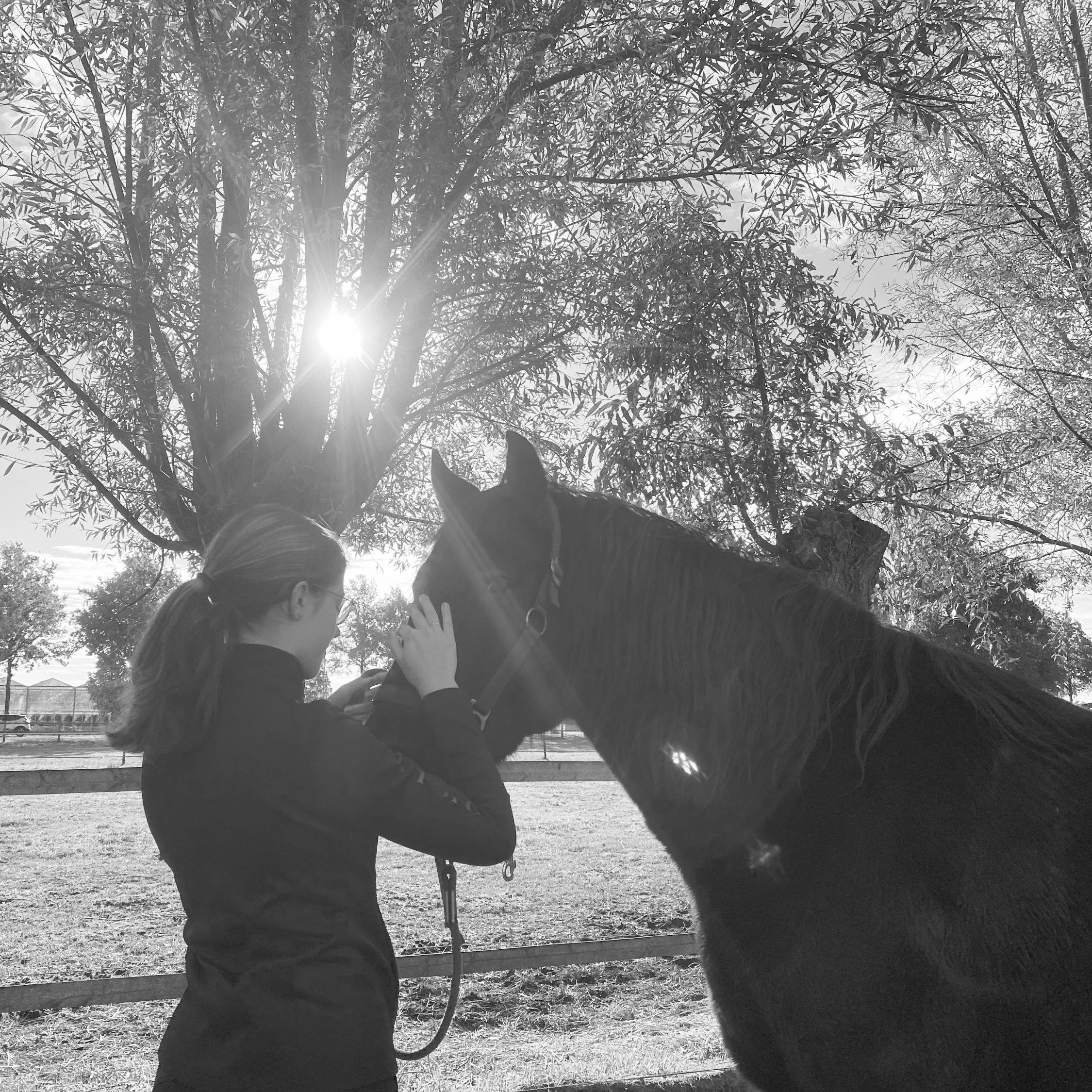 Zelfvertrouwen met hulp van paarden