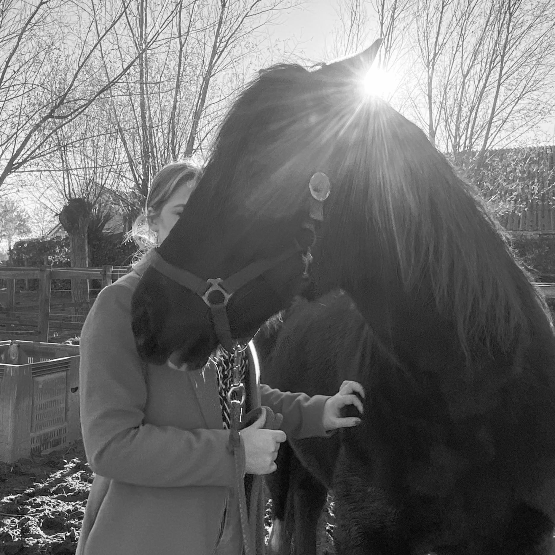 Grenzen aangeven met hulp van paarden