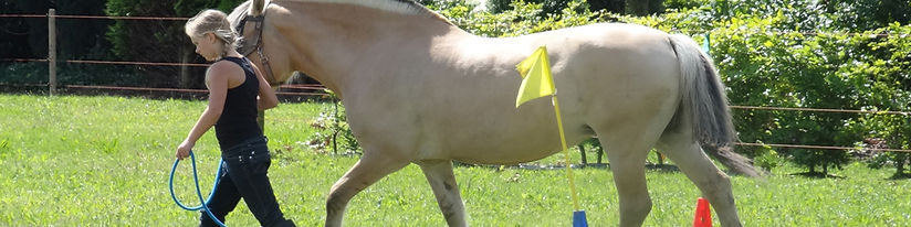 Roosenheuvel-PaardenCoaching-KinderenCoa