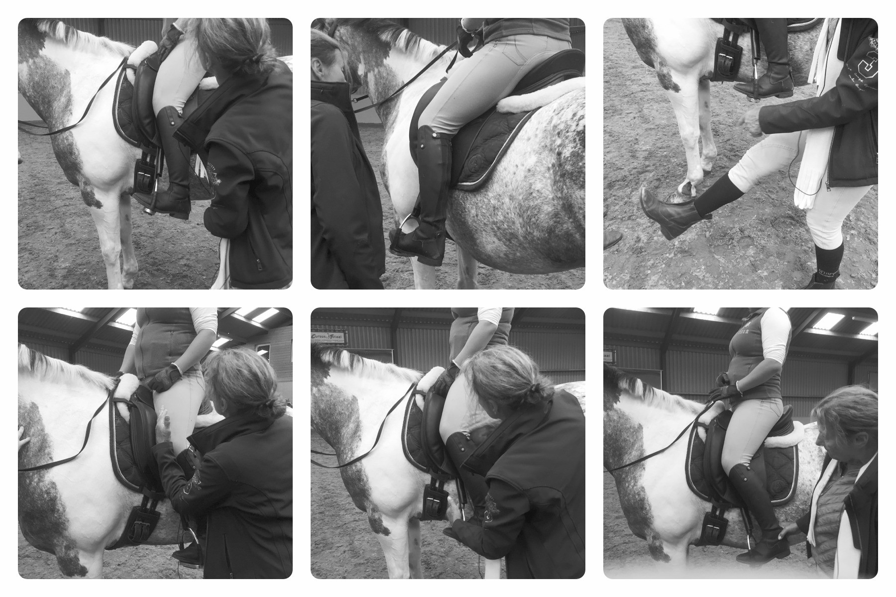 Centered Riding Open Clinic